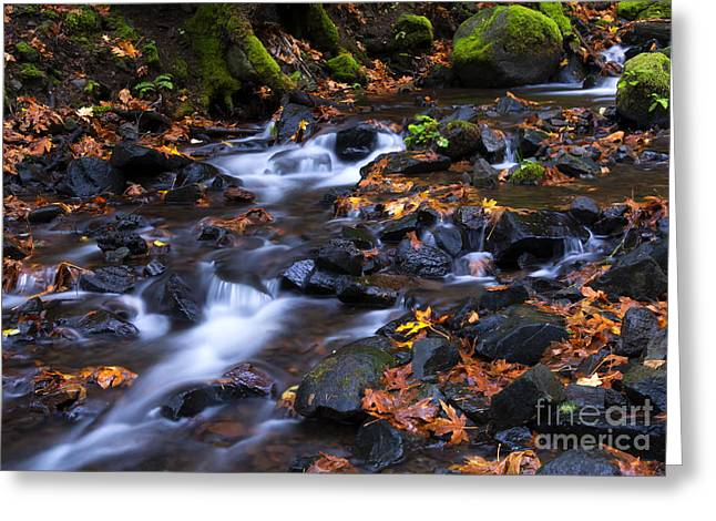 Starvation Greeting Cards - Autumn Meander Greeting Card by Mike Dawson