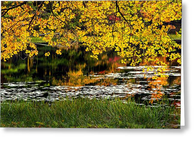 Lilly Pads Greeting Cards - Autumn Pond Greeting Card by Bill  Wakeley