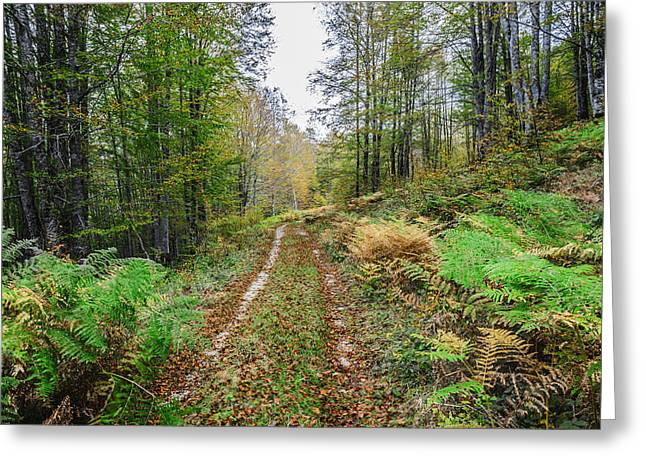 Green Day Greeting Cards - Autumn road Greeting Card by Tilyo Rusev