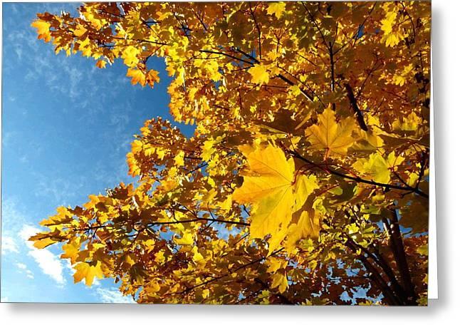 Autumn Splendor Greeting Cards - Autumn Splendor 9 Greeting Card by Will Borden