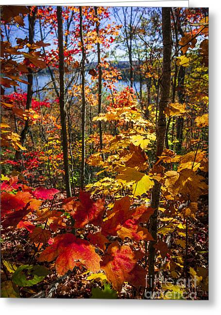Lookout Greeting Cards - Autumn splendor Greeting Card by Elena Elisseeva