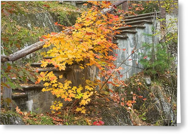 Maine Landscape Greeting Cards - Autumn steps near Smalls Falls in Maine Greeting Card by Keith Webber Jr