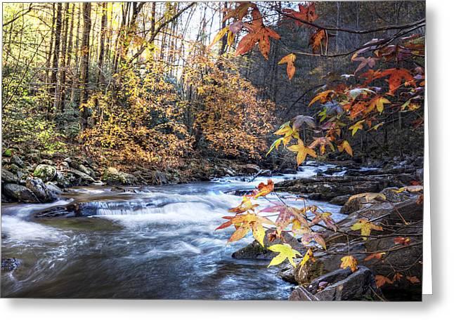 Tree Leaf On Water Greeting Cards - Autumn Stream Greeting Card by Debra and Dave Vanderlaan