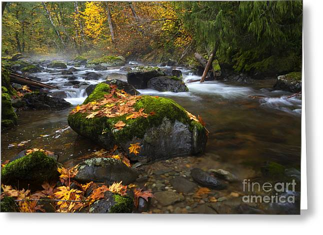 Skate Greeting Cards - Autumn Stream Greeting Card by Mike Dawson