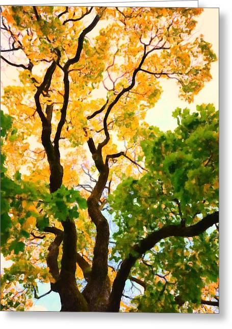 Hdr Landscape Mixed Media Greeting Cards - Autumn tree Greeting Card by Toppart Sweden