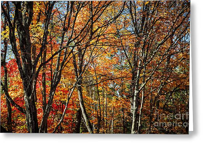 Fall Trees Greeting Cards - Autumn trees Greeting Card by Elena Elisseeva