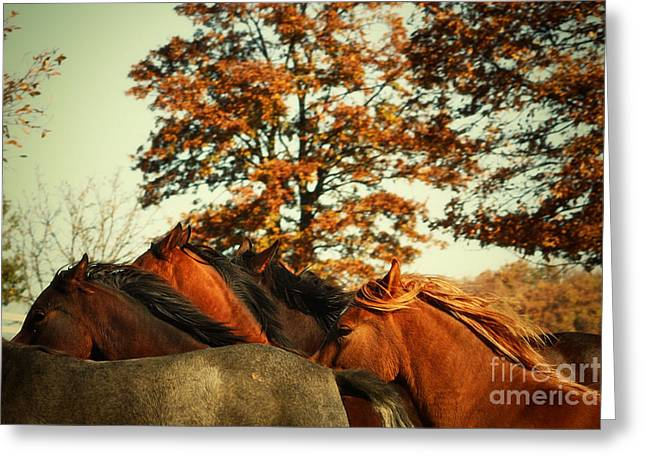 Dimitar Hristov Greeting Cards - Autumn Wild Horses Greeting Card by Dimitar Hristov
