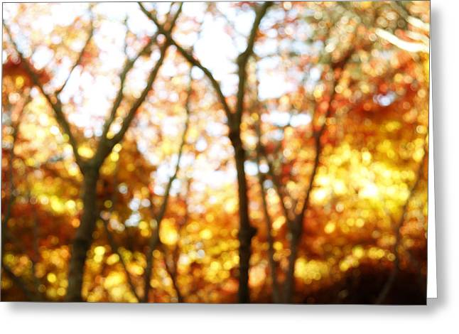 Outdoor Photographs Greeting Cards - Autumnal forest Greeting Card by Les Cunliffe