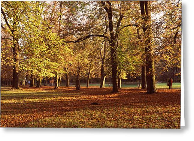 Fallen Leaf Greeting Cards - Autumnal Trees In A Park, Ludwigsburg Greeting Card by Panoramic Images