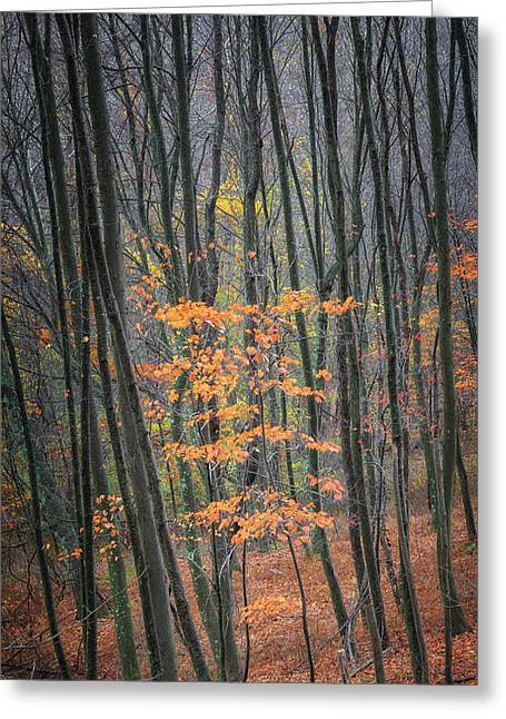 New England Autumn Greeting Cards - Autumns Last Stand Greeting Card by Bill  Wakeley