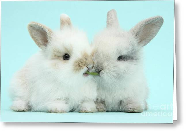 House Pet Greeting Cards - Baby Bunnies Greeting Card by Mark Taylor