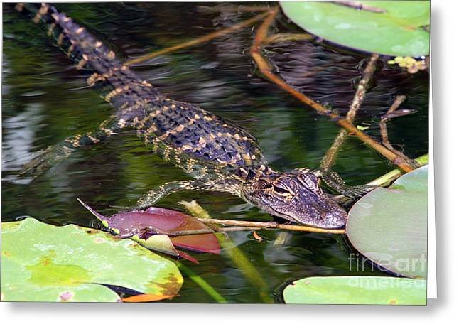 Baby Shark Greeting Cards - Baby Gator Greeting Card by Rick Bravo
