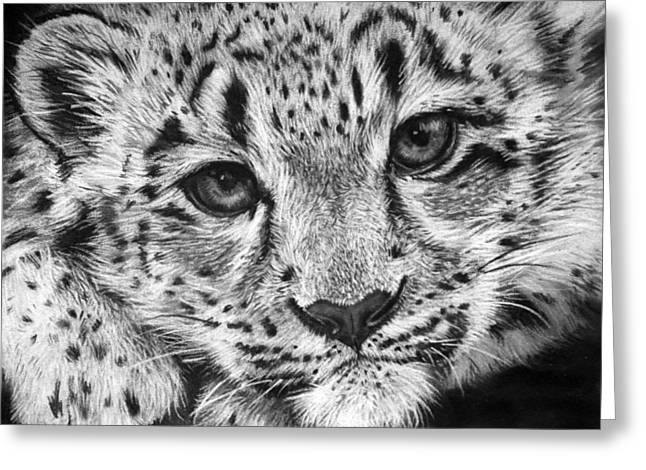 Leopard Drawings Greeting Cards - Baby Snow Leopard Greeting Card by Sharlena Wood
