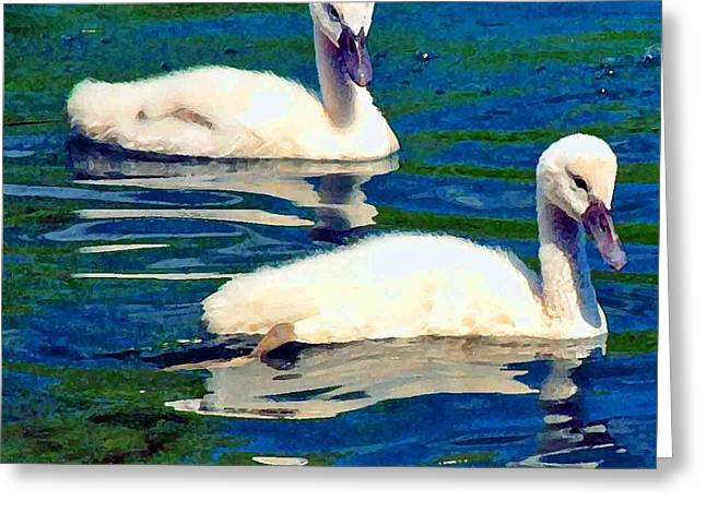 Trees Reflecting In Water Greeting Cards - Baby Swans Greeting Card by Pat Now