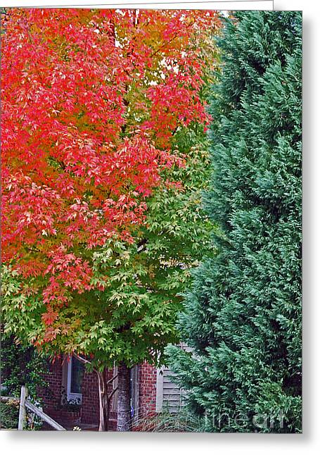 Photos Of Autumn Greeting Cards - Back Door Greeting Card by Skip Willits