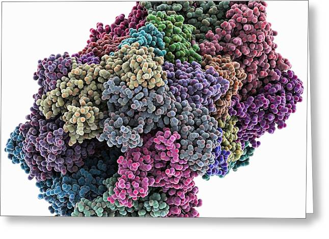 Chaperone Greeting Cards - Bacterial protease molecule Greeting Card by Science Photo Library