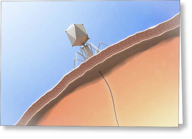 Bacteriophage Infecting E. Coli Bacterium Greeting Card by Maurizio De Angelis