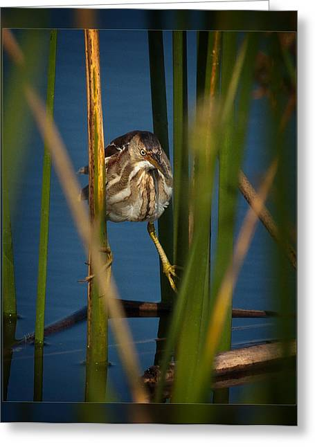 Close-up Greeting Cards - Balancing Act Greeting Card by Dawn Currie