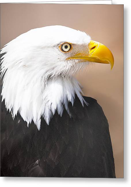Splish Splash Greeting Cards - Bald Eagle Greeting Card by David Millenheft