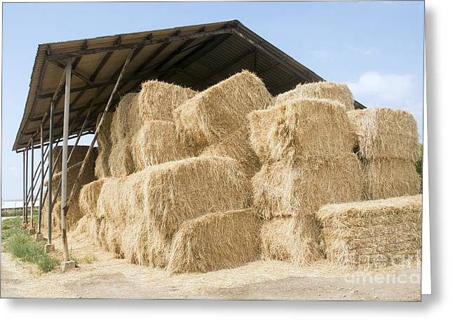 Outbuildings Greeting Cards - Bales Of Straw, Israel Greeting Card by PhotoStock-Israel