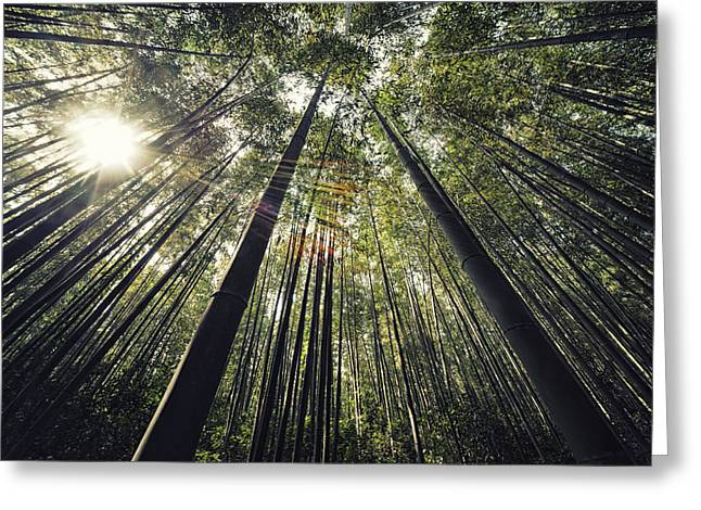 Flare-up Greeting Cards - Bamboo Canopy Greeting Card by Mountain Dreams