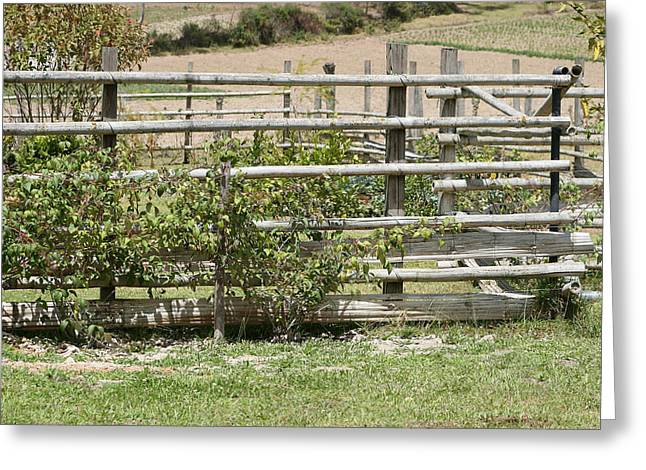 Bamboo Fence Greeting Cards - Bamboo Fence in a Pasture Greeting Card by Robert Hamm