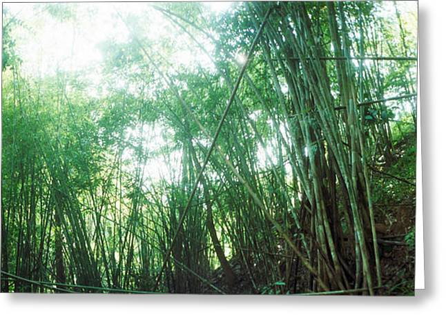 Bamboo Forest, Chiang Mai, Thailand Greeting Card by Panoramic Images