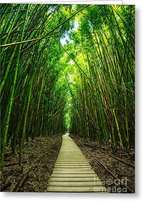 Bamboo Forest Greeting Card by Jamie Pham