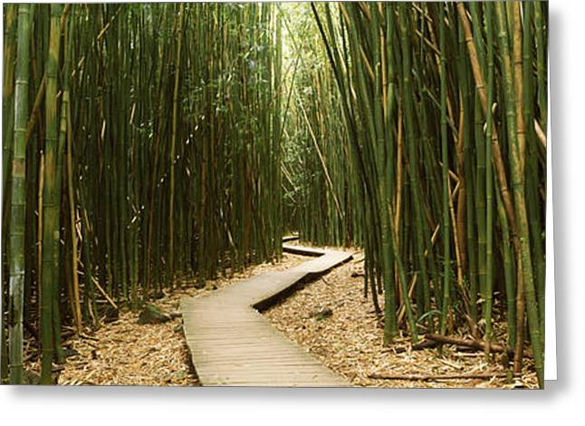 Sacred Greeting Cards - Bamboo Forest, Oheo Gulch, Seven Sacred Greeting Card by Panoramic Images