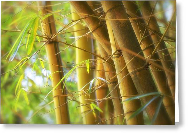 Cellphone Greeting Cards - Bamboo Gold Greeting Card by Jade Moon