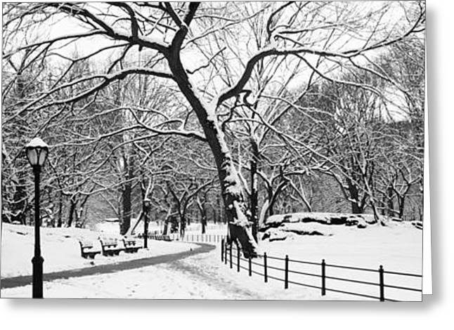 Central Park Winter Greeting Cards - Bare Trees During Winter In A Park Greeting Card by Panoramic Images