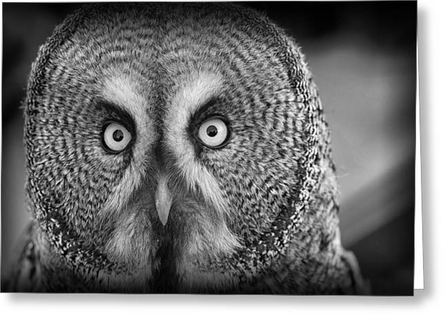 Lovely Owl Greeting Cards - Barn Owl Greeting Card by Mountain Dreams