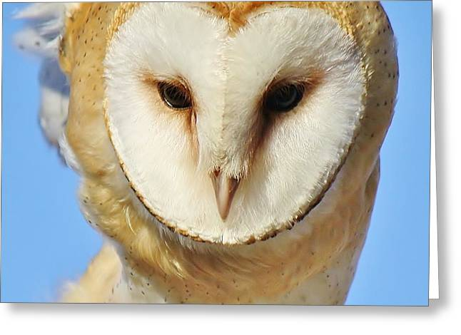 Paulette Thomas Photography Greeting Cards - Barn Owl Up Close Greeting Card by Paulette Thomas