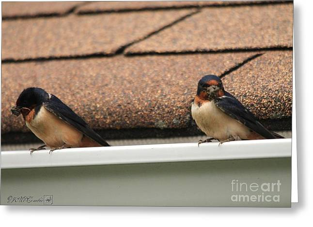 Mud Nest Greeting Cards - Barn Swallows Constructing Their Nest Greeting Card by J McCombie