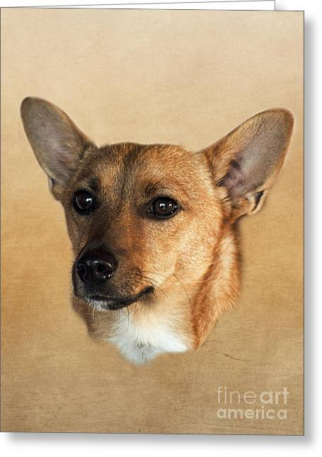 Dog Pics Greeting Cards - Barney Greeting Card by Linsey Williams