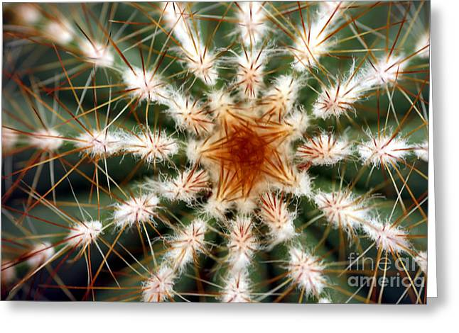 Adaptation Greeting Cards - Barrel Cactus Spines Greeting Card by Dr. Keith Wheeler