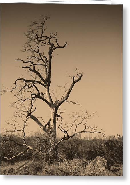 San Pasqual Greeting Cards - Barren Greeting Card by Dave Hall