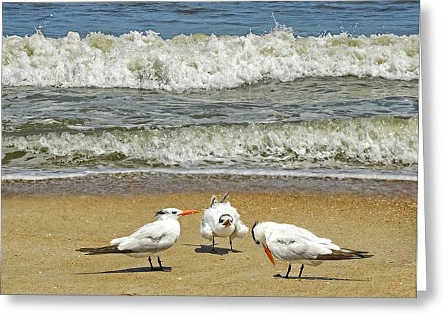 Ocean Art Photos Greeting Cards - Beach Birds Greeting Card by Steven  Michael