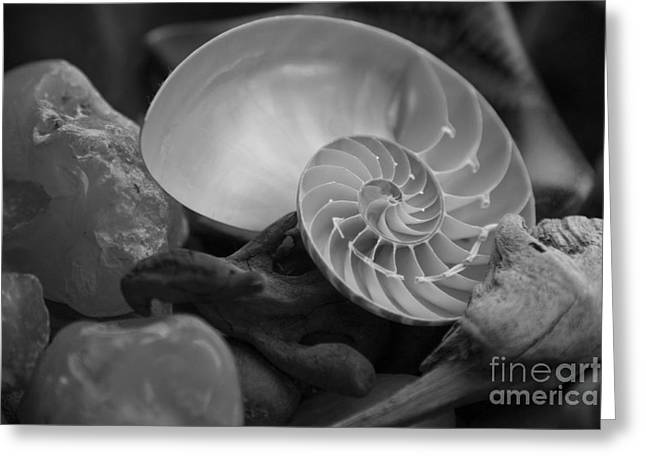 Agate Beach Greeting Cards - Beach Treasures 2 Greeting Card by Jeanette French