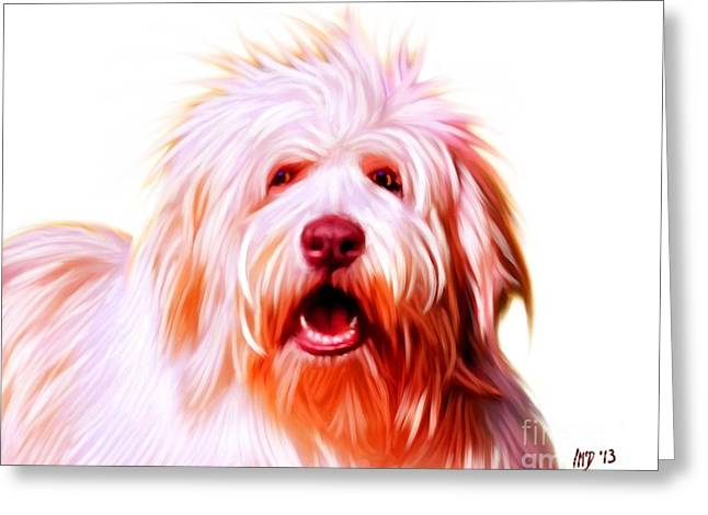 Buy Dog Digital Greeting Cards - Bearded Collie Greeting Card by Iain McDonald