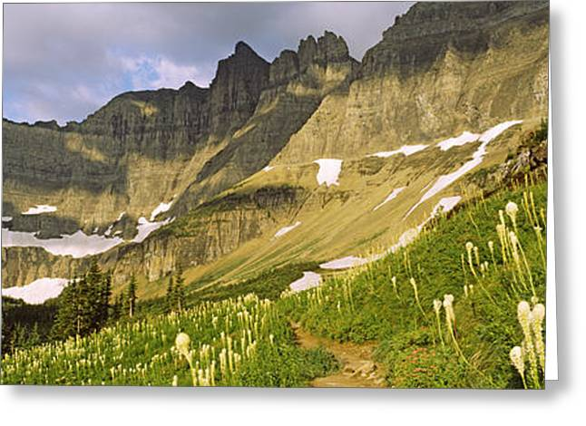 Urban Images Greeting Cards - Beargrass Xerophyllum Tenax Greeting Card by Panoramic Images