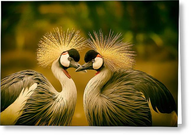 Face To Face Greeting Cards - Beautiful Grey Crowned Cranes Greeting Card by Mountain Dreams
