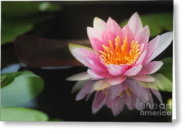 Vibrant Green Greeting Cards - Beautiful Waterlily Greeting Card by Anek Suwannaphoom