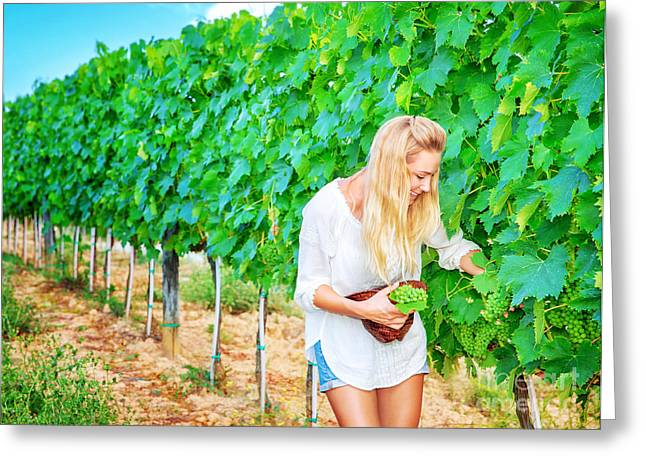 Grape Vineyard Greeting Cards - Beautiful young winemaker Greeting Card by Anna Omelchenko