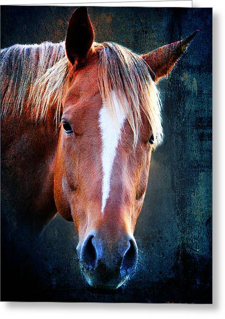 Race Horse Greeting Cards - Beauty2 Greeting Card by Mark Ashkenazi