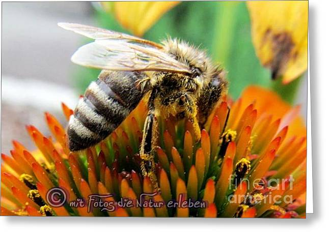 Bee Greeting Card by Olivia Narius