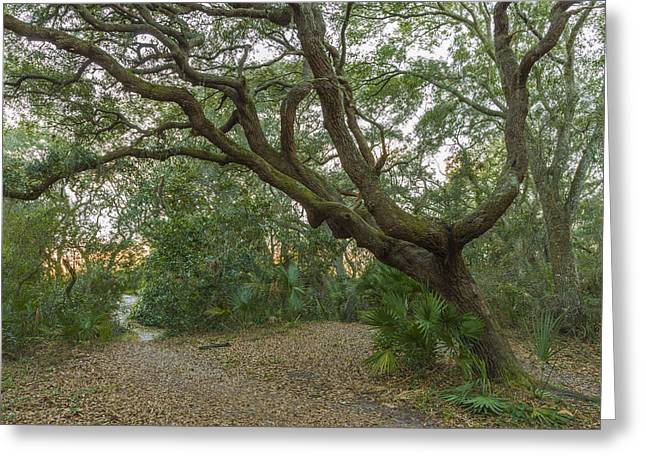 Acrylic. Green Greeting Cards - Behind the House Greeting Card by Jon Glaser