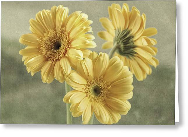 Textured Floral Greeting Cards - Believe Greeting Card by Kim Hojnacki