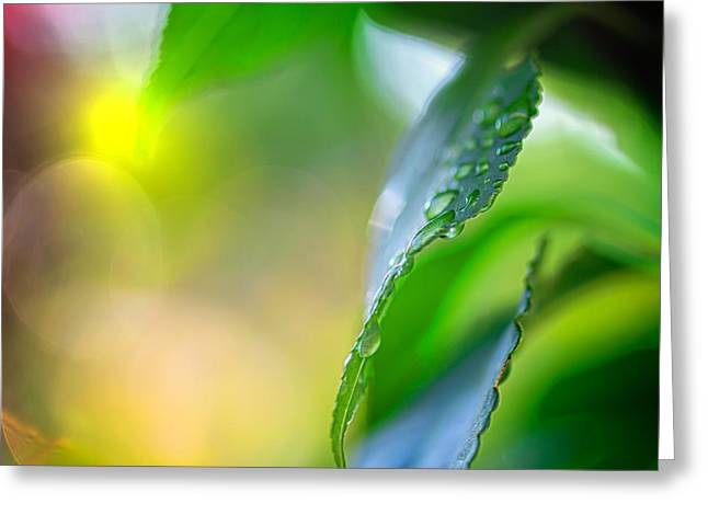Raining Greeting Cards - Below The Flower Line Greeting Card by Bob Orsillo