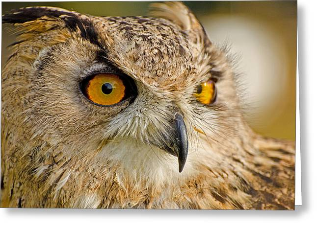 Night Hawk Greeting Cards - Bengal Owl Greeting Card by Chris Thaxter